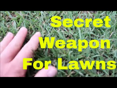 Lawn Care Secret Tip for Best Lawn on the Block